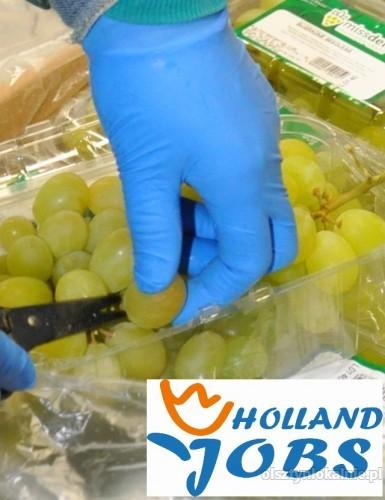 Holandia-Praca na produkcji od zaraz!!!